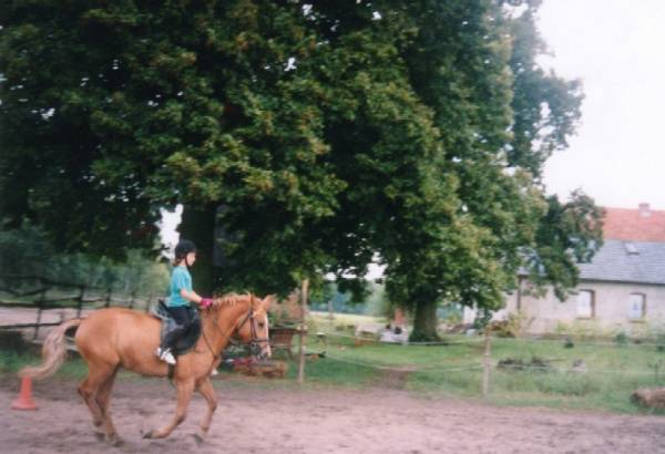 Błońsko - Ośrodek Jeździecki - Zagroda Pod Lipami